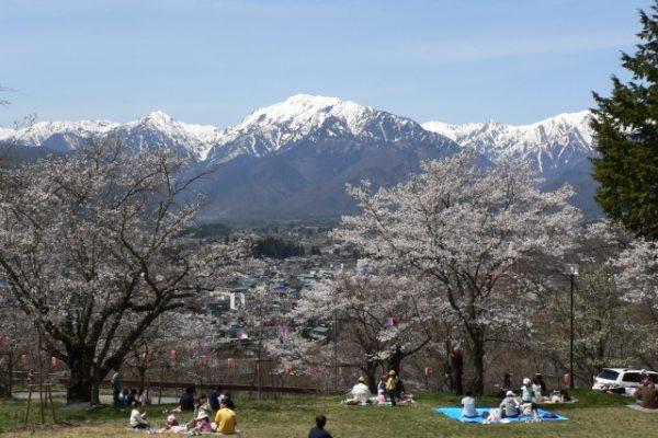 おおまち桜まつり