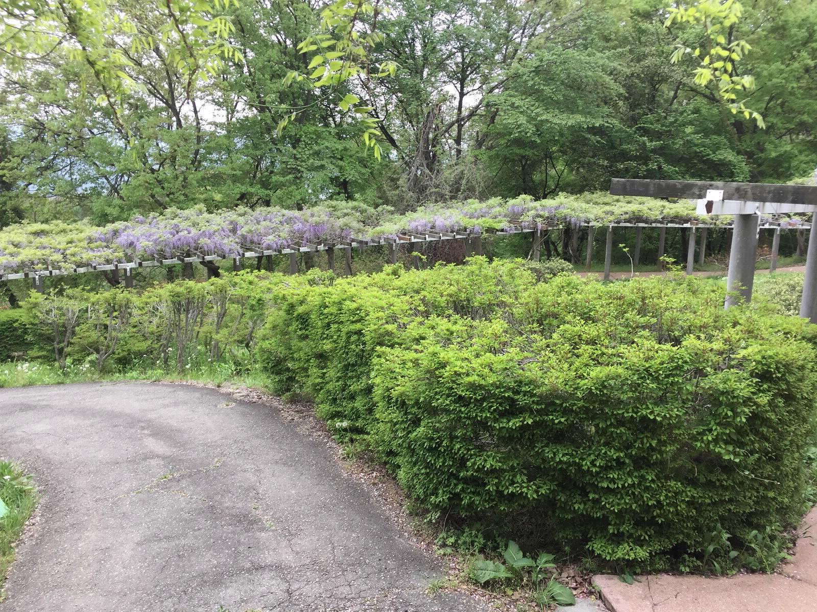 茶臼山自然植物園
