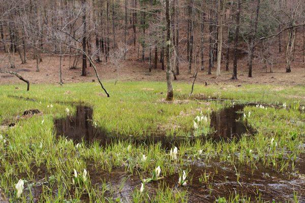 居谷里湿原
