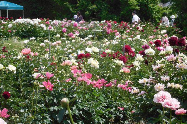 あずみ野花園