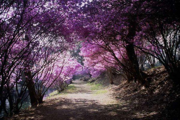 馬見塚公園