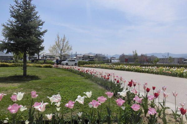 篠ノ井中央公園