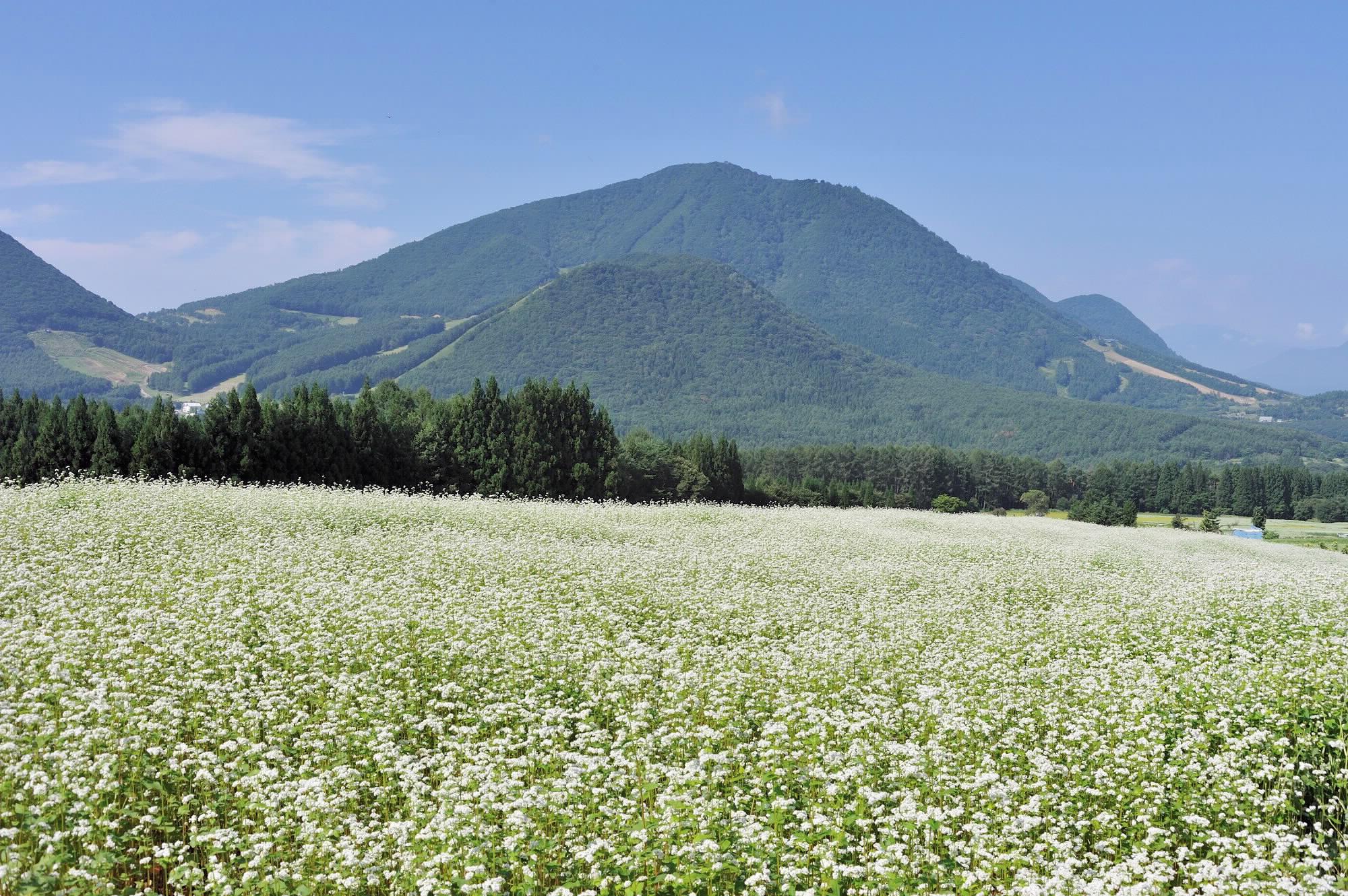 須賀川そば 法印さんとそばの花まつり
